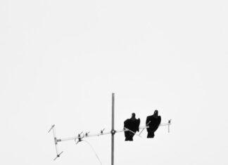 konwerter satelitarny